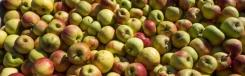 Philips Fruittuin: zelf vers fruit plukken